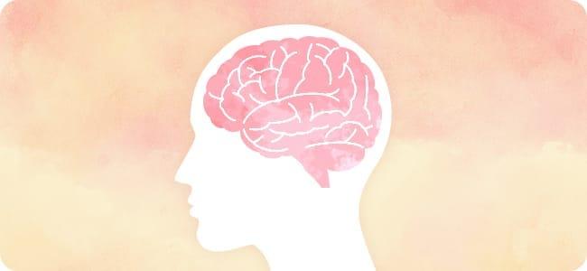 脳のイラストイメージ
